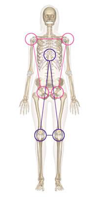 タイプ別 体幹の動き